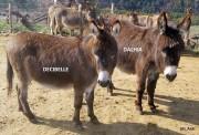 Décibelle et Dalhia