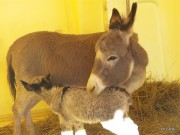 JoliCoeur-le-jour-de-sa-naissance-2