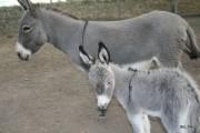Tania et Bouba